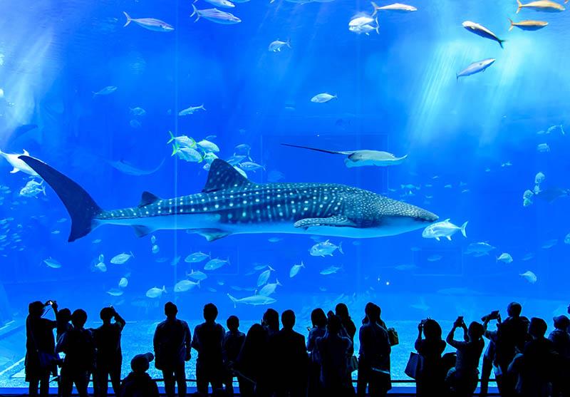 Aquarium of the Bay - Northern California Bay Area
