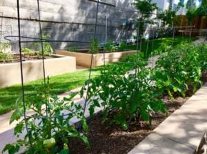Image of the on-site garden at The Heritage Downtown